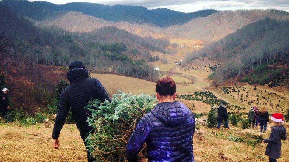 Christmas Tree Farm Asheville Nc.Local Griswold Worthy Places To Find Your Christmas Tree