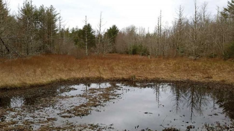 cranberry-bog-wnc-asheville-morganton-avltoday-foothills-conservancy