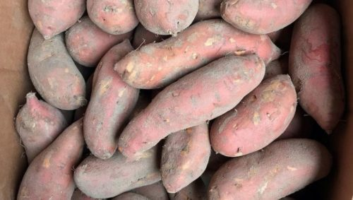 sweet potato-sweet potatoes-nc